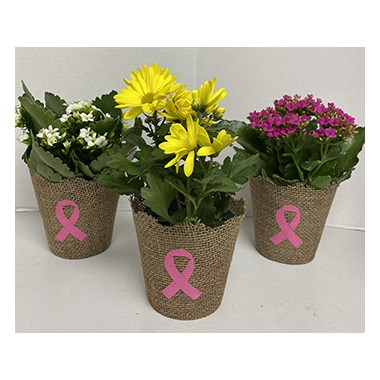blooming_plant_for_pink_ribbon